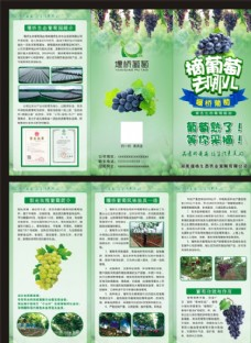 葡萄园三折页  传单