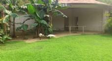 动物园孔雀