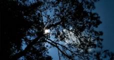 松树延时摄影