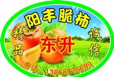 柿子 标签