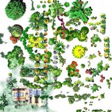 手绘园林树木平面效果图景观设计