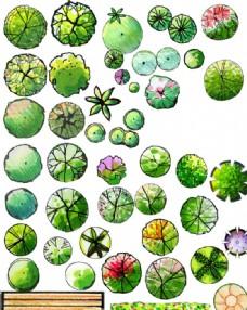 园林景观设计树木手绘平面效果图