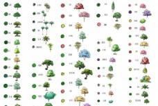 园林植物目录手绘效果图