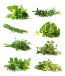 新鲜的绿叶蔬菜图片