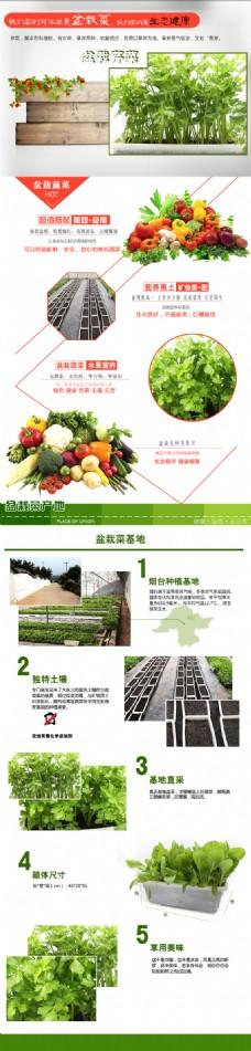 盆栽菜模板