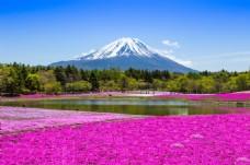 美丽的富士山风景图片