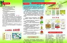 茶籽油宣传单页